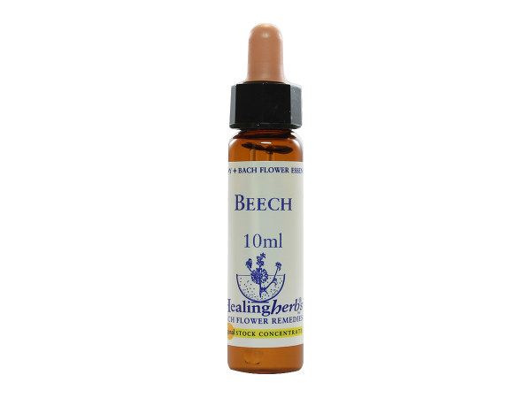 Beech - Fagus sylvatica - 10ml